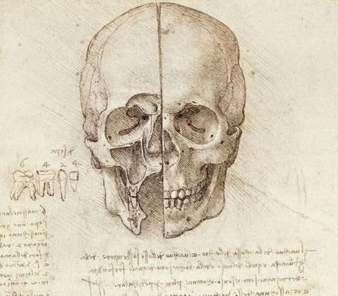 pervyj_kurs_medicinskogo_anatomy.jpg
